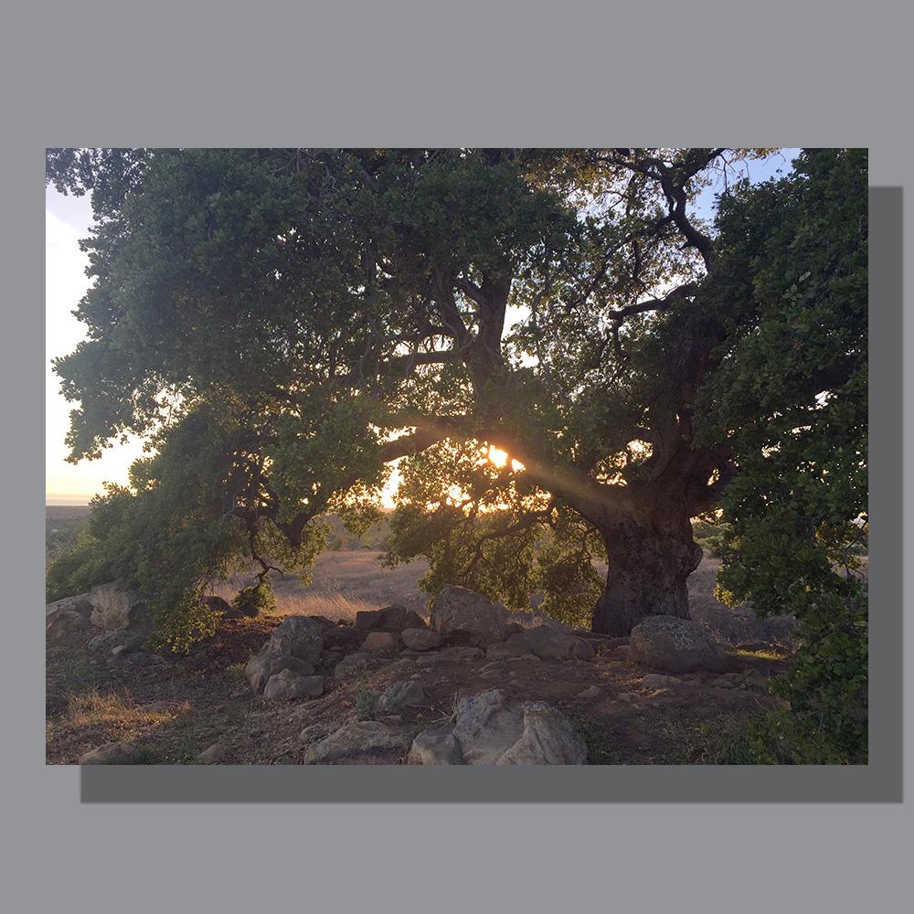 image-landscape-san-marcos-preserve-1
