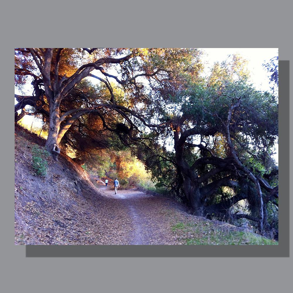 image-landscape-san-marcos-preserve-3